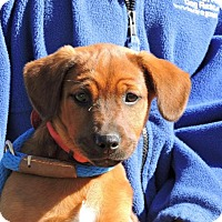 Adopt A Pet :: Ethel - Berkeley Heights, NJ