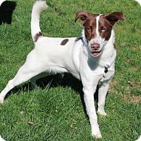 Adopt A Pet :: PUPPY CHIP - Salem, NH