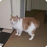 Adopt A Pet :: Curly - El Dorado Hills, CA