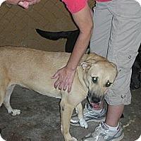 Adopt A Pet :: Sadie - Fort Valley, GA
