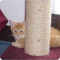 Adopt A Pet :: Murphy - Quincy, MA