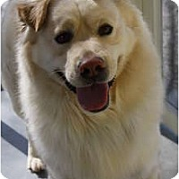 Adopt A Pet :: Patrick - Hagerstown, MD