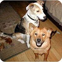 Adopt A Pet :: Sugar - Scottsdale, AZ