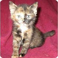 Adopt A Pet :: Rosey - Richmond, VA