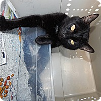 Adopt A Pet :: Fiona - Chilhowie, VA