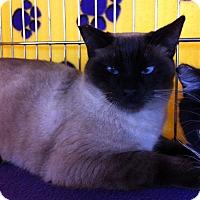 Adopt A Pet :: Thor M - Sacramento, CA