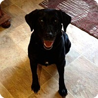 Adopt A Pet :: Hallie - Spring Valley, NY