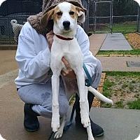 Adopt A Pet :: Wiley - Richmond, VA
