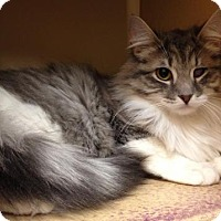 Adopt A Pet :: Hailey - Richmond Hill, ON