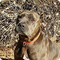 Adopt A Pet :: Charming Mr Cory - Albuquerque, NM