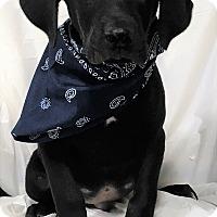 Adopt A Pet :: Aden - Mooresville, NC