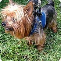 Adopt A Pet :: Mr. Harley (Adoption Pending!) - Fishers, IN