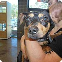 Adopt A Pet :: FINN - Lacombe, LA
