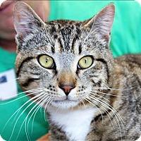 Adopt A Pet :: Sonny Stubs - San Luis Obispo, CA