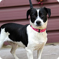 Adopt A Pet :: Olanda - Los Angeles, CA