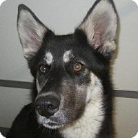 Adopt A Pet :: Layla - Holton, KS
