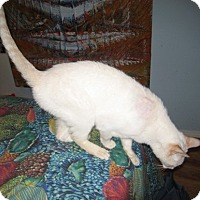 Adopt A Pet :: Willie - Laguna Woods, CA