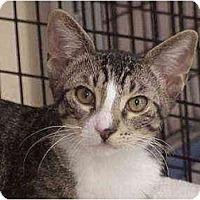 Adopt A Pet :: Maxwell & Elle - Deerfield Beach, FL