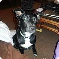 Adopt A Pet :: Marla - Hancock, MI