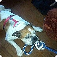 Adopt A Pet :: Ms. Bella - Strongsville, OH