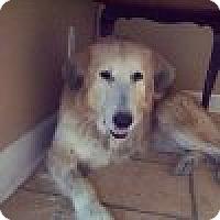 Adopt A Pet :: Bernie - Yorktown, VA