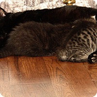 Adopt A Pet :: Royal Family-Di, Kate, & Will - Florence, KY
