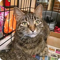 Adopt A Pet :: *Nibbles - Pembroke, GA