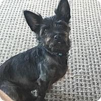 Adopt A Pet :: Severous - Battleboro, VT