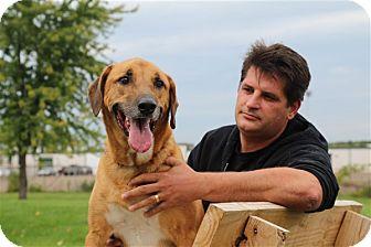 Rhodesian Ridgeback/Shepherd (Unknown Type) Mix Dog for adoption in Elyria, Ohio - Tyson