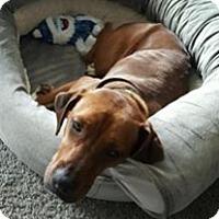 Adopt A Pet :: Anna - Pompton Lakes, NJ