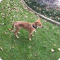 Adopt A Pet :: Aero (fostered in Dallas TX) - Cranston, RI