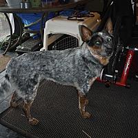 Adopt A Pet :: Soco - Mead, WA