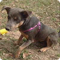 Adopt A Pet :: HAILEY - Portsmouth, NH