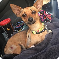 Adopt A Pet :: Oliver - Homestead, FL