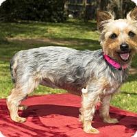 Adopt A Pet :: Alana PENDING - Santa Fe, TX