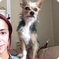 Adopt A Pet :: Levon - greenville, SC