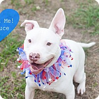 Adopt A Pet :: Deuce - Vancouver, BC