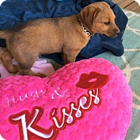 Adopt A Pet :: ROBBY - East Windsor, CT