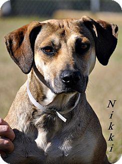 Hound (Unknown Type) Mix Dog for adoption in Gainesville, Florida - Nikki