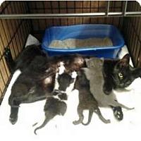 Adopt A Pet :: Diva & Babies - Lantana, FL
