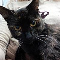Adopt A Pet :: Kasan - Santa Monica, CA