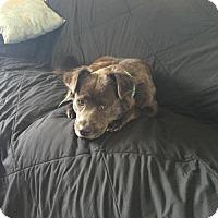 Adopt A Pet :: Chloe - Lakeville, MN