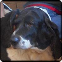 Adopt A Pet :: Lilly - Barrington, IL