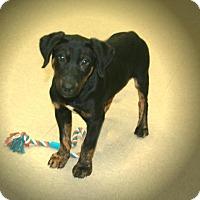 Adopt A Pet :: Stormer - Lufkin, TX