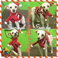 Adopt A Pet :: Shelby - South Gate, CA
