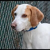 Adopt A Pet :: Birdie - Brick, NJ