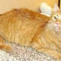 Adopt A Pet :: Rudy - Miami, FL