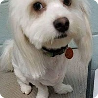 Adopt A Pet :: NINA AND NIGEL - Brattleboro, VT