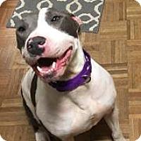 Adopt A Pet :: NOVA - NYC, NY