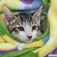 Adopt A Pet :: Chyna - Westchester, CA